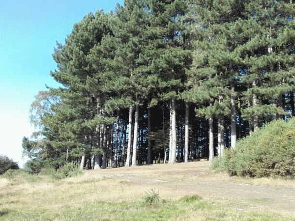 A Walk In Sutton Park